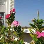 تزيين «رياض الشهداء» في الدراز تجديدًا للعهد معهم