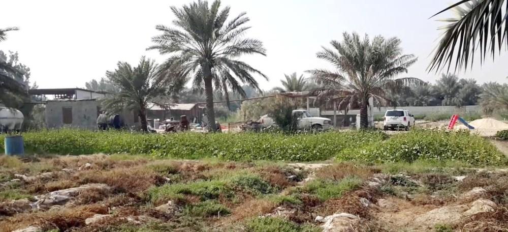 ثوّار النمر: هدف النظام السعوديّ من جرف «مزارع الرامس» التغيير الديموغرافيّ وسرقة أملاك أهالي القطيف